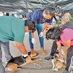 Esterilizan a más de 100 mascotas en Ayala